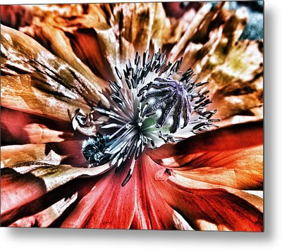 Poppy And The Bee Metal Print by Marianna Mills