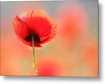 Poppy Dream Metal Print by Roeselien Raimond