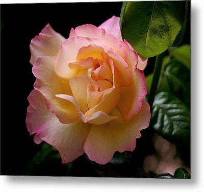 Portrait Of A Rose Metal Print by Rona Black