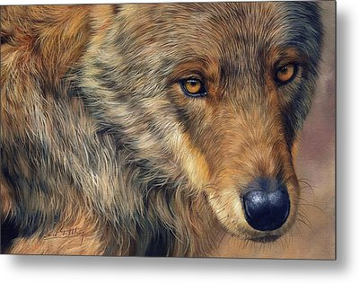 Portrait Of A Wolf Metal Print by David Stribbling