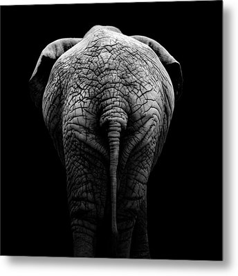 Portrait Of Elephant In Black And White II Metal Print by Lukas Holas