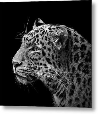 Portrait Of Leopard In Black And White IIi Metal Print by Lukas Holas