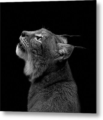 Portrait Of Lynx In Black And White Metal Print by Lukas Holas