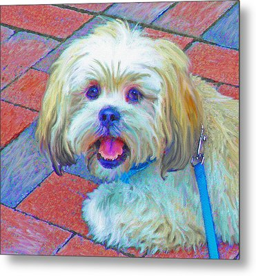 Portrait Of Shih Tzu Metal Print by Jane Schnetlage