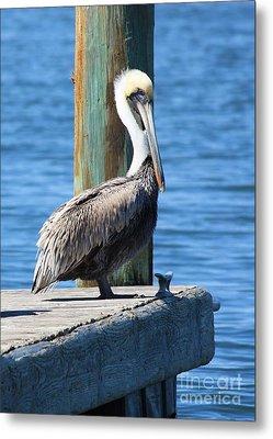 Posing Pelican Metal Print by Carol Groenen