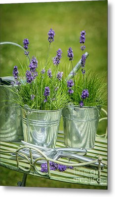 Pots Of Lavender Metal Print by Amanda Elwell