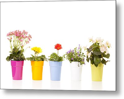 Potted Flowers Metal Print by Alexey Stiop