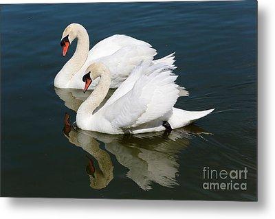 Pretty Swan Pair Metal Print by Carol Groenen