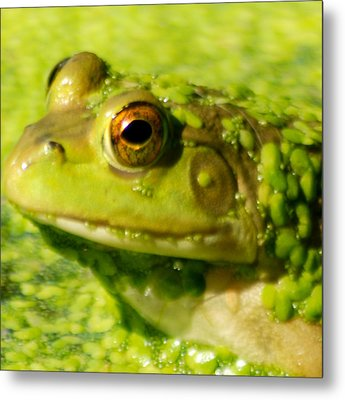 Profiling Frog Metal Print by Optical Playground By MP Ray