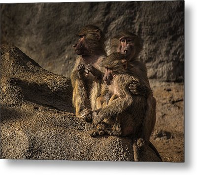 Protection From The Family Metal Print by Chris Fletcher
