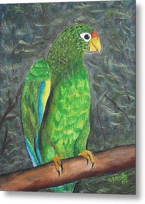 Puerto Rican Parrot Metal Print by Gloria E Barreto-Rodriguez