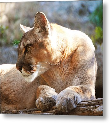 Puma 3 Metal Print by DiDi Higginbotham