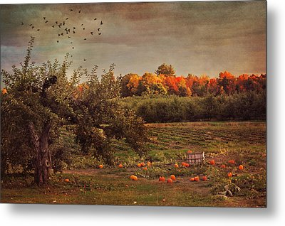 Pumpkin Patch In Autumn Metal Print by Joann Vitali