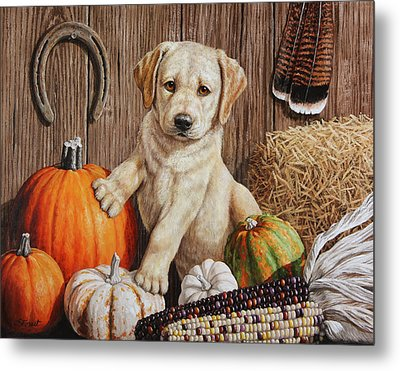Pumpkin Puppy Metal Print by Crista Forest