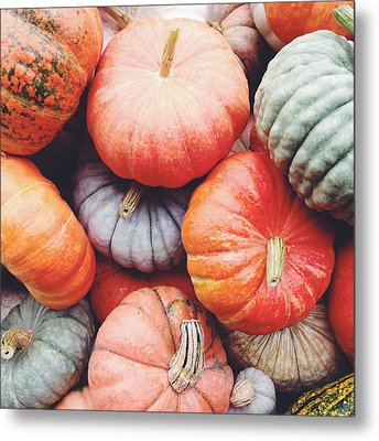 Pumpkins Galore Metal Print by Kim Fearheiley