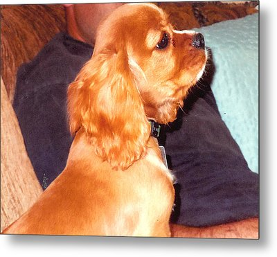 Puppy At Attention Metal Print by Barb Baker