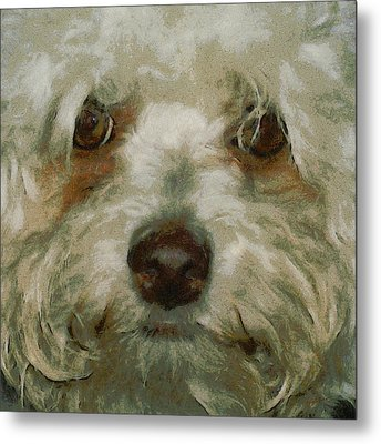 Puppy Eyes Metal Print by Ernie Echols