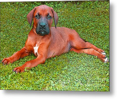 Puppy Love Metal Print by Jo Collins