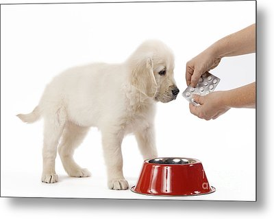 Puppy Receiving Medicine Metal Print by Jean-Michel Labat