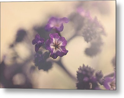 Purple Haze Metal Print by Faith Simbeck