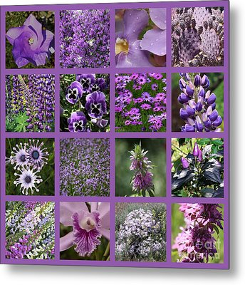 Purple In Nature Collage Metal Print by Carol Groenen
