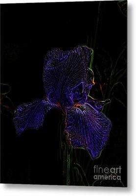 Purple Iris Metal Print by Amanda Collins