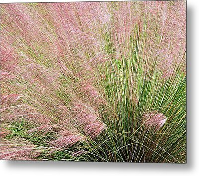 Purple Muhly Grass 2 Metal Print by Scott Parker