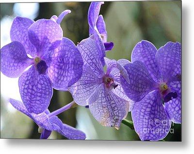 Purple Orchids Metal Print by Kathleen Struckle
