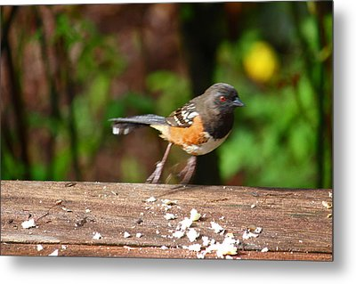 Push Off Before Take Off Metal Print by Kym Backland