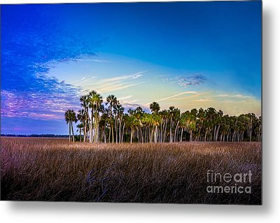 Quailty Time Metal Print by Marvin Spates