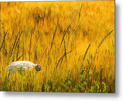 Queen Anne's Lace Metal Print by Theresa Tahara
