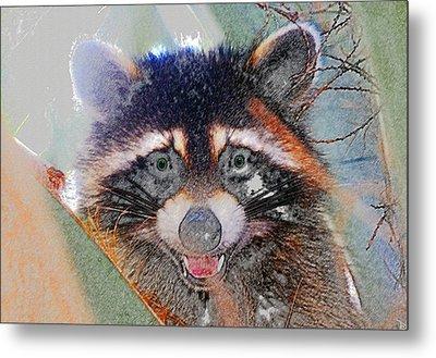 Raccoon Face Metal Print by David Lee Thompson