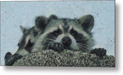 Raccoons Painterly Metal Print by Ernie Echols