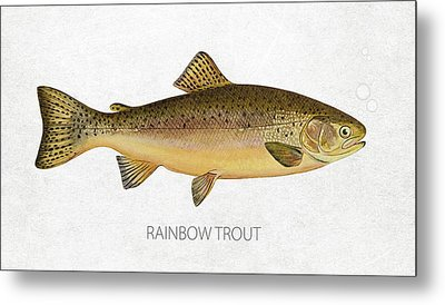 Rainbow Trout Metal Print by Aged Pixel