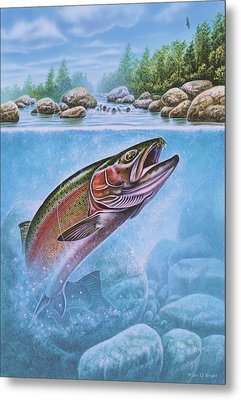 Rainbow Trout Split Level Metal Print by Jon Q Wright