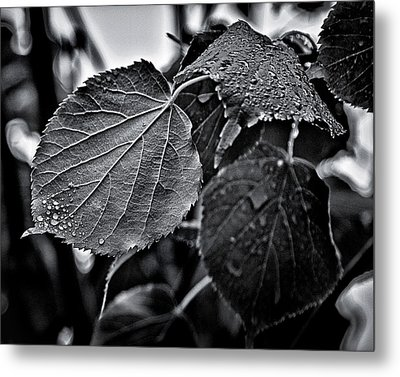 Raindrops After The Storm Metal Print by Brian Carson
