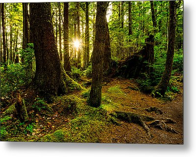 Rainforest Path Metal Print by Chad Dutson
