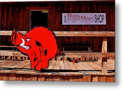Razorback Country Metal Print by Benjamin Yeager