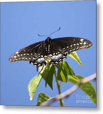Ready For Take-off Metal Print by French Toast