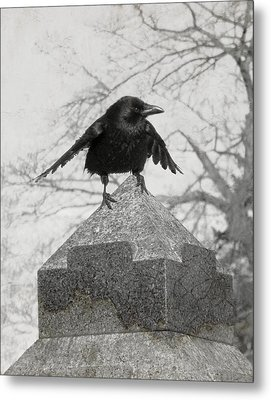 Ready To Fly Metal Print by Gothicrow Images