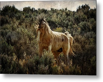 Ready To Rumble D9637 Metal Print by Wes and Dotty Weber