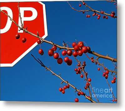 Rebellious Ornamental Crabapples In Autumn Metal Print by Anna Lisa Yoder