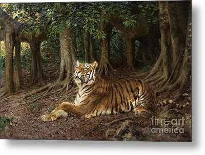 Reclining Tiger Metal Print by Pg Reproductions