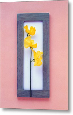 Rectangular Purple Frame With Yellow Metal Print by Panoramic Images