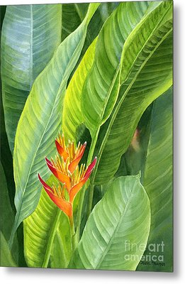 Red And Gold Heliconia Metal Print by Sharon Freeman