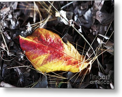 Red And Yellow Metal Print by John Rizzuto