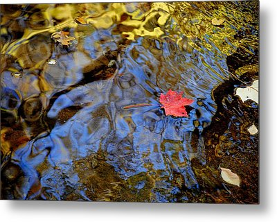 Red Blue And Gold Metal Print by Frozen in Time Fine Art Photography