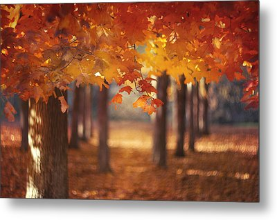 Red Canopy Metal Print by Magda  Bognar