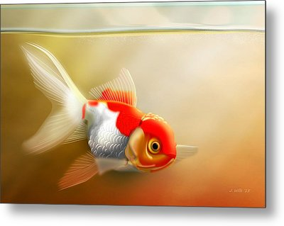 Red Cap Goldfish Metal Print by John Wills