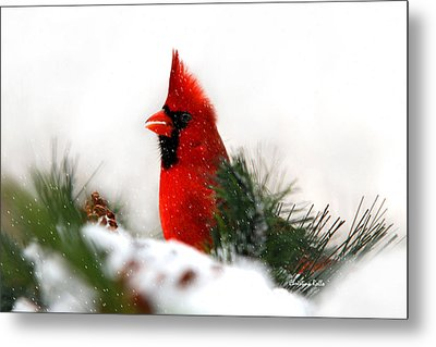 Red Cardinal Metal Print by Christina Rollo